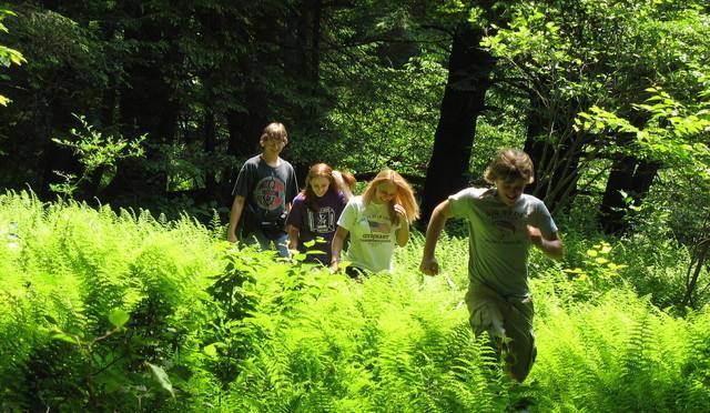 activiteit-in-bos