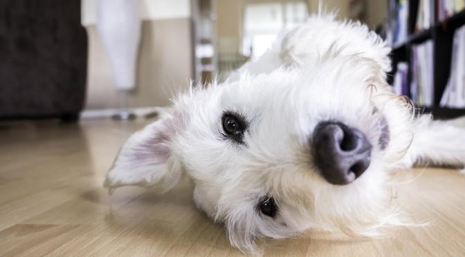 vloer-huisdieren