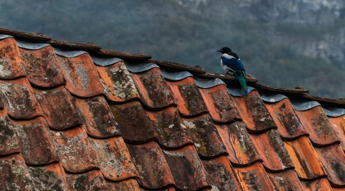 een vogel die op dakpannen zit