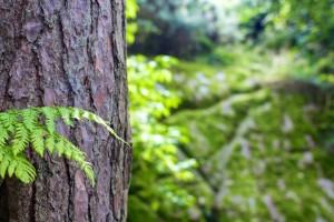 Een wilde douglas boom