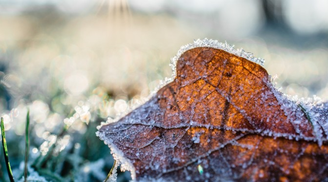 dried-leaf-cover-by-snow-at-daytime-845906