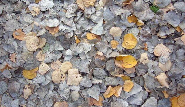 Bladeren in een tuin